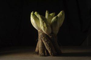 witlof met wortels, foto van Yola de Lusenet